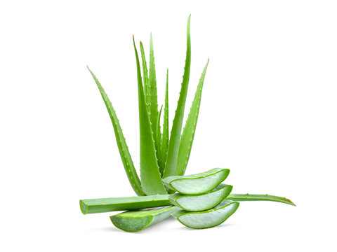 clump of green aloe vera plant isolated on white background