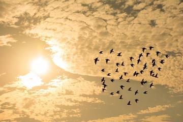 夕日 鳥の群れ ハート型