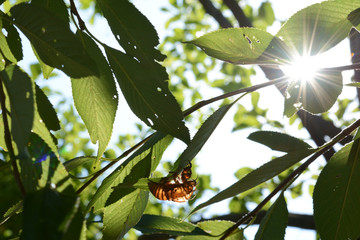 セミの抜け殻 太陽