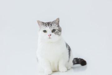 白背景の中のちょっと太った猫