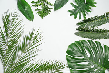 Composition of beautiful tropical leaves on white background