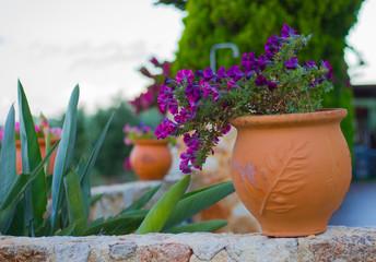 Obraz Kwiat w terakotowej donicy - fototapety do salonu