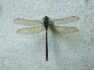 dragon fly on cement wall