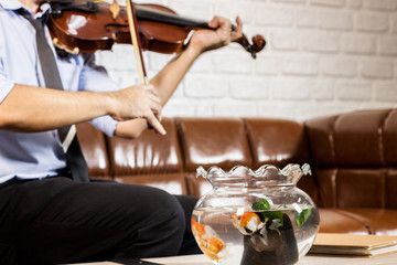 business man music passion relax time play music by violin in living room with goldfish