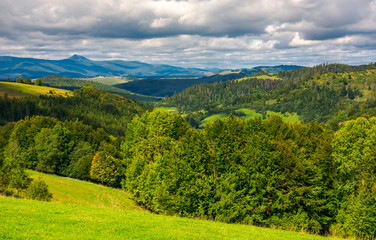 forested hills of Carpathian mountains. wonderful landscape in early autumn on a cloudy day. Pikui mountain in the far distance.