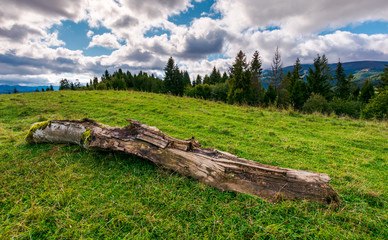 decaying log on the grassy meadow near the forest. wonderful landscape in early autumn. Borzhava mountain ridge in the distance under the cloudy sky