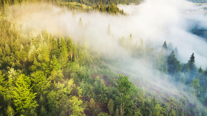 Aerial view at the forest in mist. Beautiful natural aerial landcape at the summer time