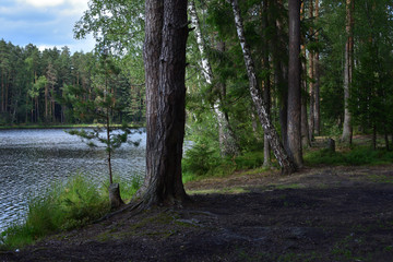 Natural landscape with a forest lake