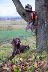 A young, pure blooded dog is lying in the lawn near the tree. On a branch hangs a weapon, a hat with a feather, a prsy is hanging on the lace. A hunting scene.
