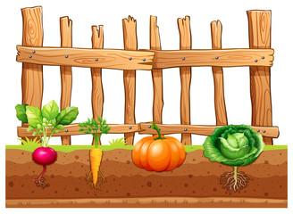 Set of different vegetables