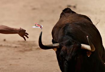 A Recortador de Anillas throws a ring onto a wild cow's horn during a display at the San Fermin festival in Pamplona