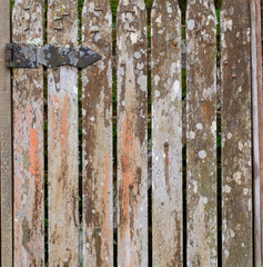 Grunge gate with orange color lichens wood texture and background