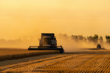 Etiqueta Engomada - Combine harvesters harvests grain in the field at sunset. Behind these dust clouds
