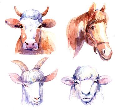 Farm animals. Cow, horse, sheep, goat. Watercolor illustration