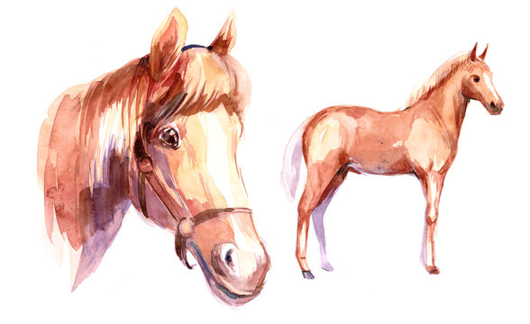 Horse. Watercolor illustration