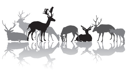 Deers silhouettes with reflection