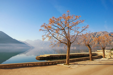 Winter Mediterranean landscape with Chinaberry trees (Melia azedarach). Montenegro, Bay of Kotor ( Adriatic Sea ), embankment of Dobrota town