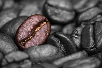 Fresh roasted coffee beans background.