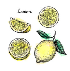 Sketch of lemon.