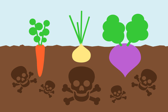Dangerous cultivation on the polluted field - crop of vegetable is contaminated by poisonous chemicals in the soil. Vector illustration