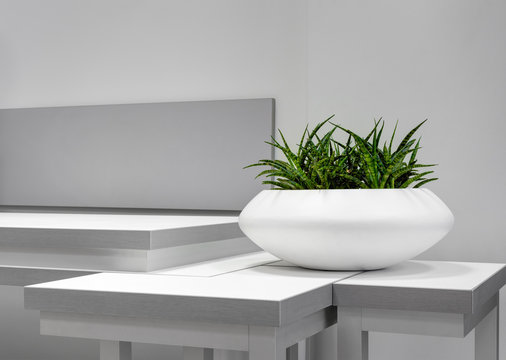 Office Interior Element: White Pot Of Green Houseplant Sansevieria On Grey-White Table Near A Wall. Green Office Plant In White Pot. Idea For Home Interrior Decoration. Flower In Pot