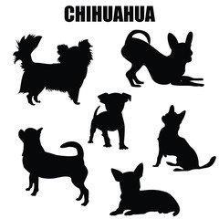 Chihuahua dog vector icons and silhouettes. Set of illustrations in different poses.