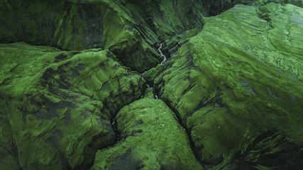 Icelandic jungle.