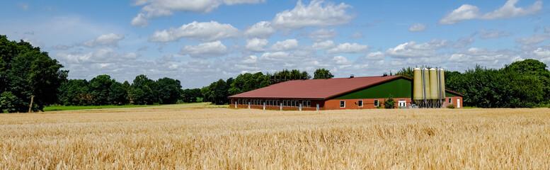Moderner Schweinemaststall mit Getreidefeld davor, Banner