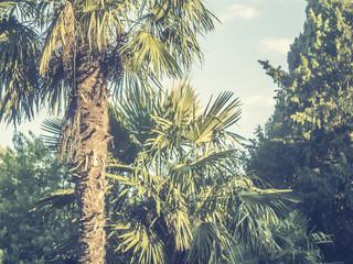 vintage toned tropic rainforest palm tree leaf close up
