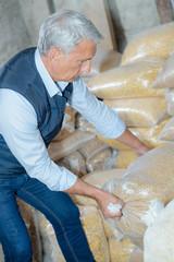 Man shifting bag of grain