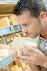 Cheese shop worker smelling on of his cheeses