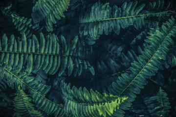 Tropical leaves background,Green background pattern.