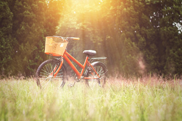 Bicycle on meadow in garden at summer