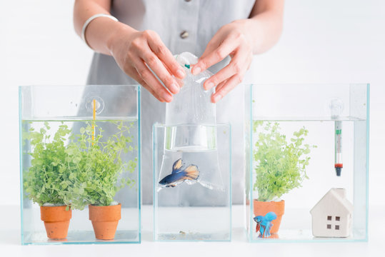 Aquarium for pet and hobby at home. Holding a plastic bag with new fish.