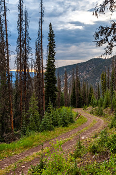 Rocky Mountain National Forest Logging Road