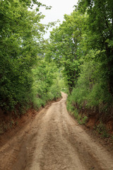 Empty clay road in the forest