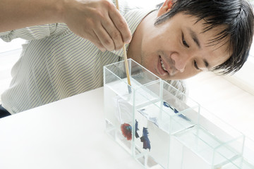 Asian male feeding siamese fighting or betta fish. Catching betta splendens by using small nylon scoop fish.