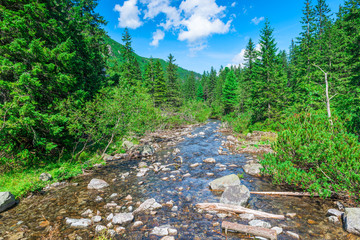 mountain stream in the forest, scenic landscape on a sunny day