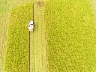 aerial view of Combine harvester machine with rice farm