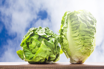 lettuce on the wooden table with clouds background