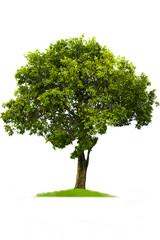 Green tree, beautiful white backdrop