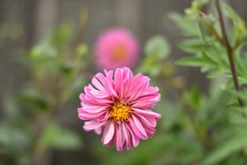 日本の美しい花