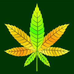 Beautiful drawing yellow cannabis leaf on green background