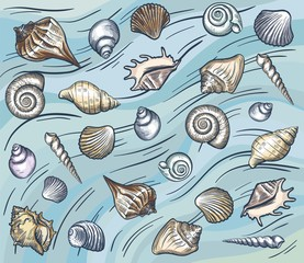 sea shellfish and seashells. vector illustration