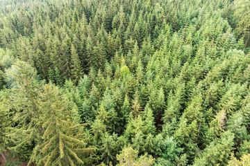 Fotobehang Bossen Forest area aerial view