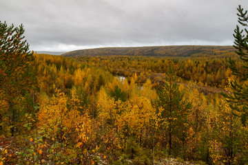 Autumn landscape, forest from high
