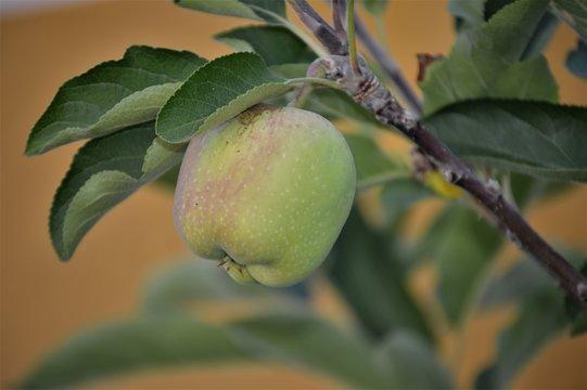 Manzana verde 1