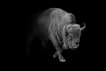 Foto op Plexiglas Bison european bison animal wildlife wallpaper
