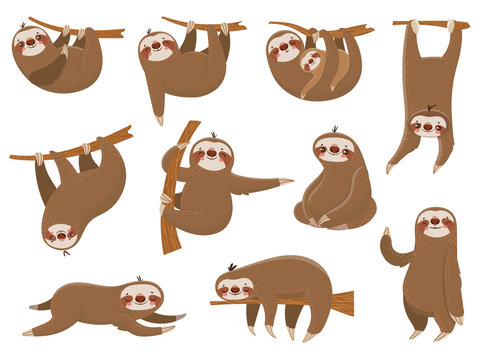 Cute cartoon sloths. Adorable rainforest animals, mother and baby on branch, funny sloth animal sleeping on jungle tree vector set