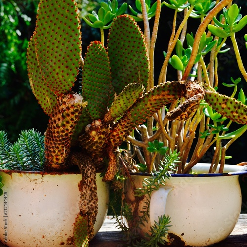 Vasi Di Cactus Stock Photo And Royalty Free Images On Fotoliacom